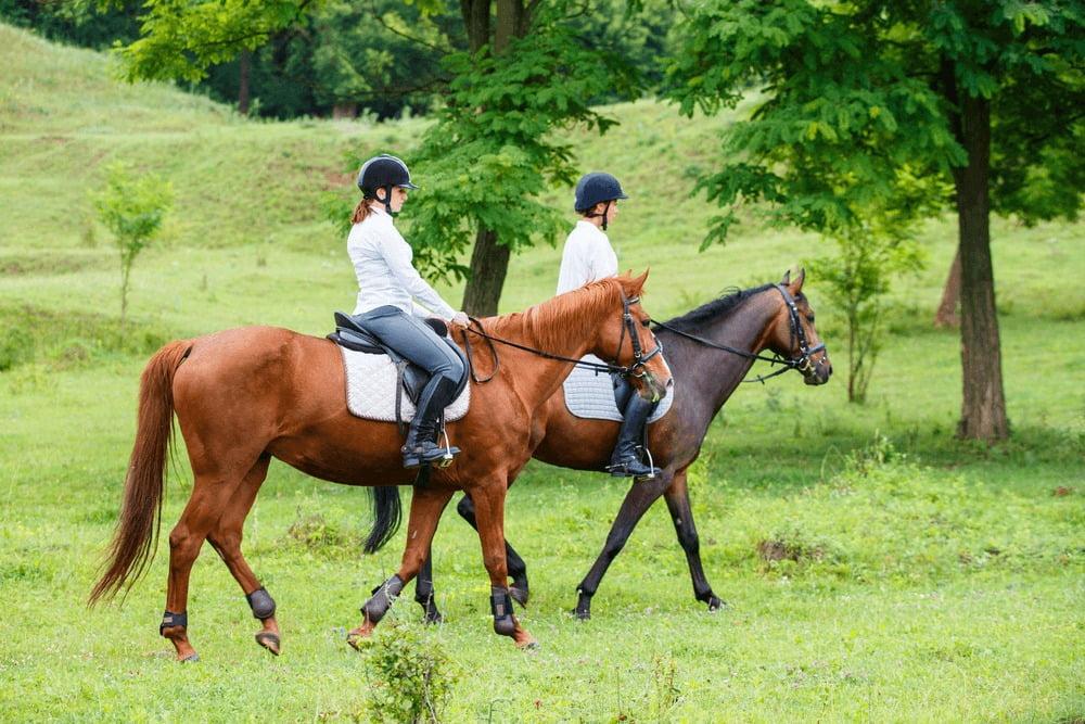 Equitation - GITE LES ECURIES VAL DE MAI - Gite La Clef Decamp - Laclefdecamp.fr