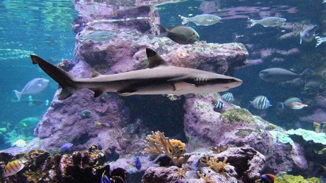 cite de la mer aquarium - ACTIVITÉS & RESTAURATION - Location de Gite La Clef Decamp - Laclefdecamp.fr