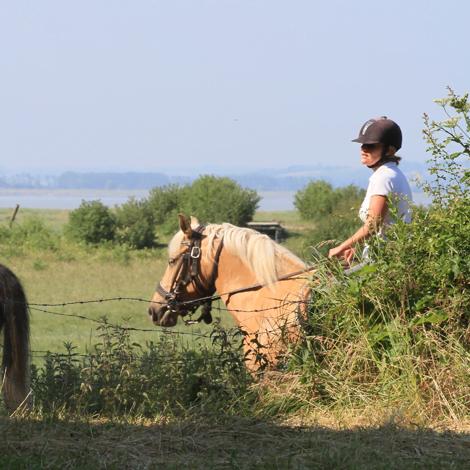 randonn%C3%A9e chevaux cotentin - ACTIVITÉS & RESTAURATION - Location de Gite La Clef Decamp - Laclefdecamp.fr